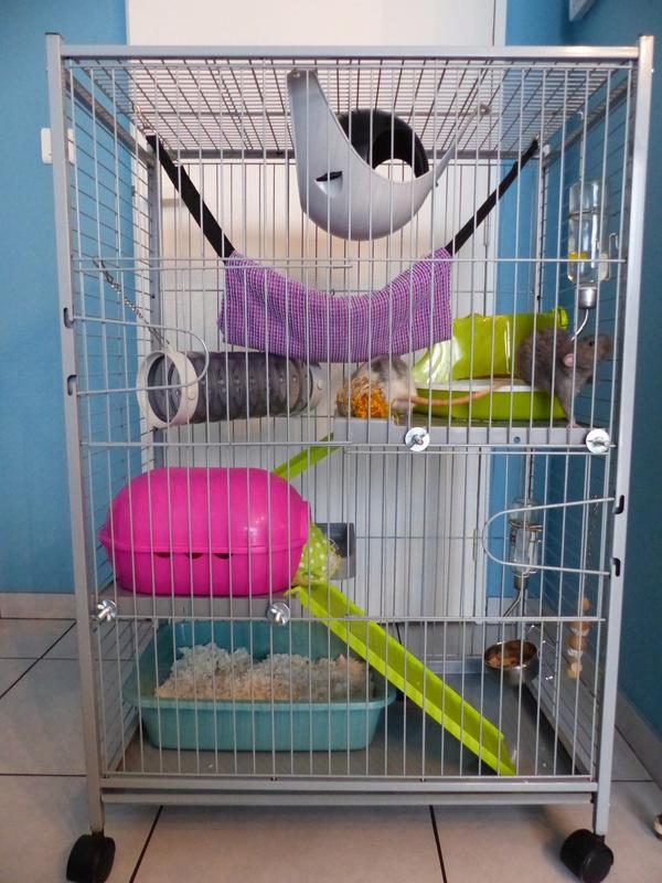 Les cage des ratous de Malo P1010014