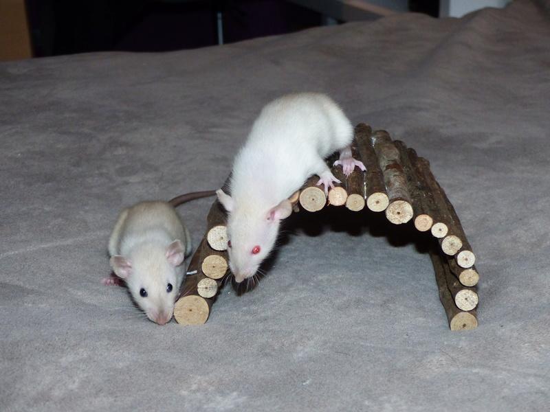 Les ratoux de Malo P1010114