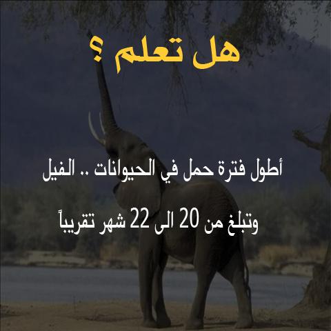 هل تعلم /  أطول فترة حمل في الحيوانات .. الفيل  5210