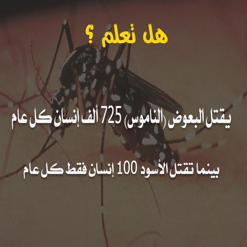 هل تعلم /  يقتل البعوض ( الناموس ) 725 ألف إنسان كل عام   5710