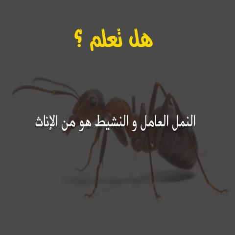 هل تعلم /  النمل العامل والنشيط هو من الإناث 6910
