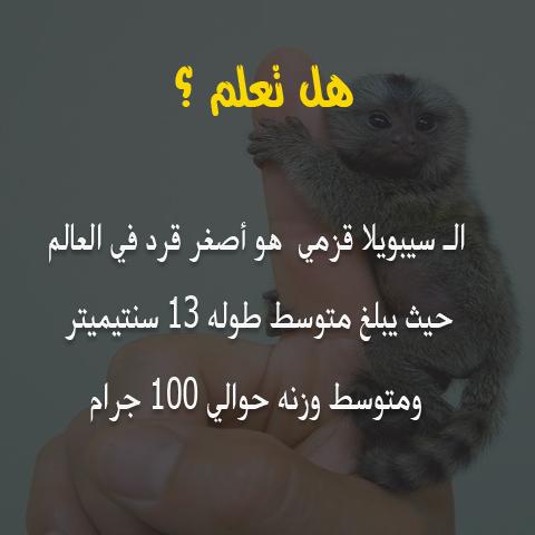 هل تعلم /  ال سيبويلا قزمي هو أصغر قرد في العالم  7710