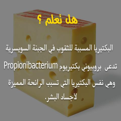هل تعلم /  البكتيربا المسببة للثقوب في الجبنة السويسرية  810