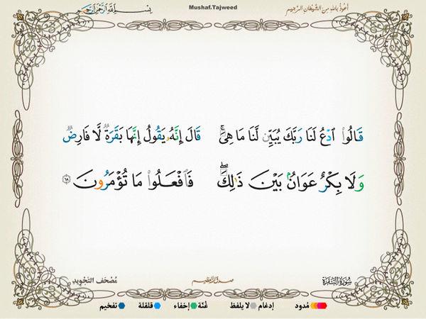 الآية 68 من سورة البقرة الكريمة المباركة Oa_68_10