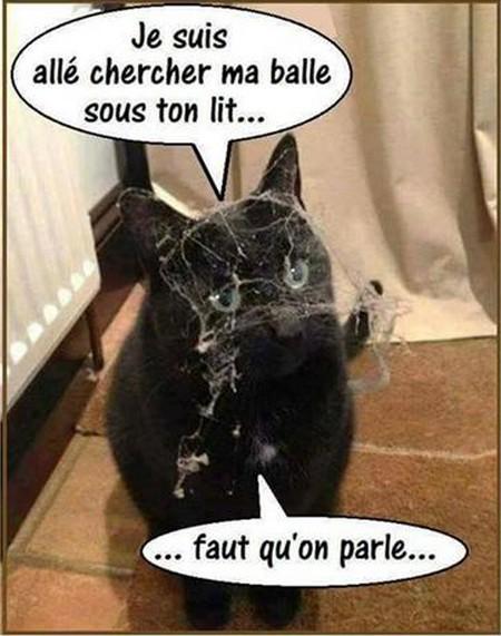 Humour graphique de Mely !!!!!!! - Page 6 4-53f810