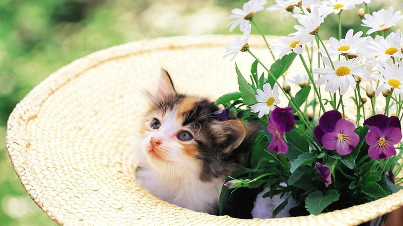 L'Amore per gli ANIMALI - Pagina 10 Kitten10