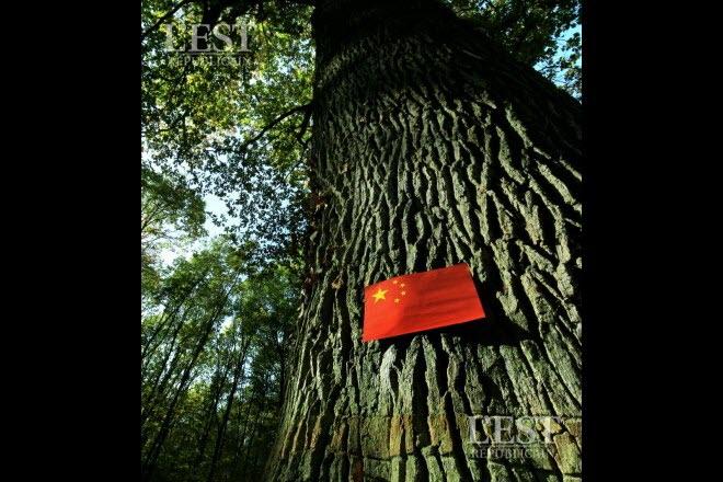 Les forêts du Grand Est se vendent à la Chine H4tqe510