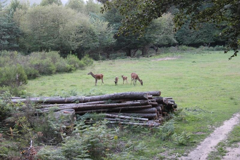 Pour GERARD / Territoire de chasse en Alsace 19610
