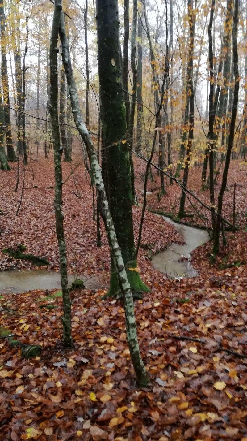 Pour GERARD / Territoire de chasse en Alsace - Page 3 Bonne10