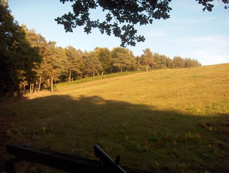 Pour GERARD / Territoire de chasse en Alsace Hpim0910