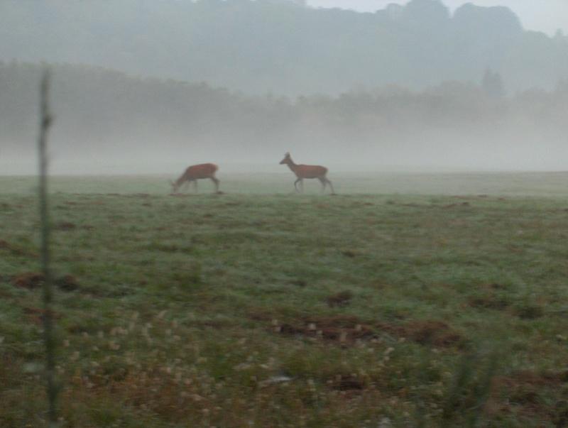 Pour GERARD / Territoire de chasse en Alsace Hpim0911