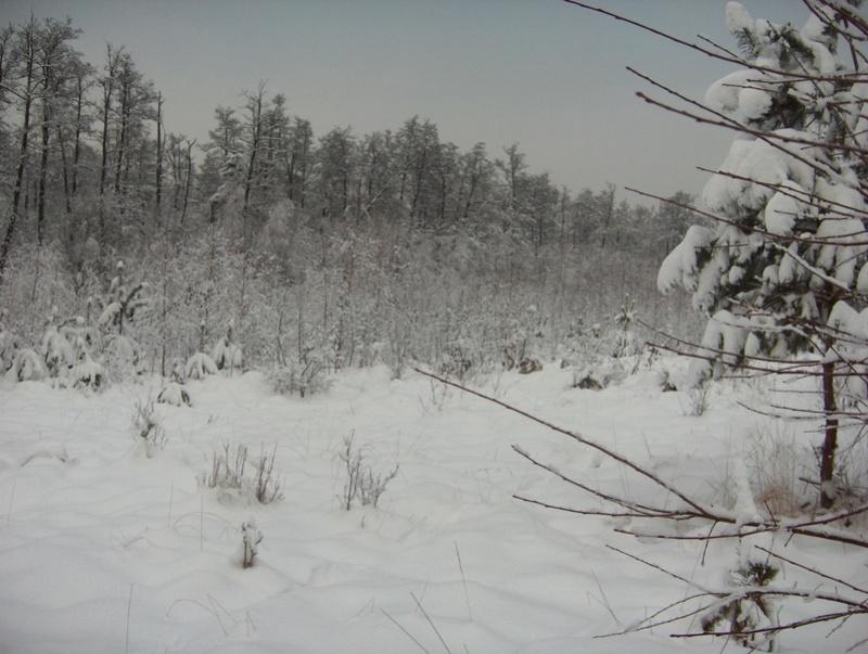Pour GERARD / Territoire de chasse en Alsace Hpim1011