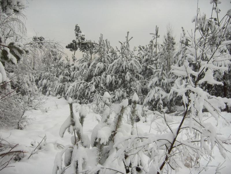 Pour GERARD / Territoire de chasse en Alsace Hpim1012