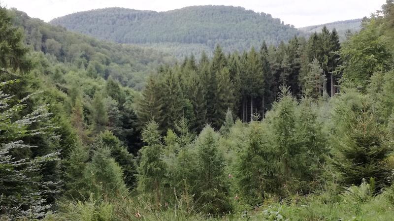 Pour GERARD / Territoire de chasse en Alsace Img_2011
