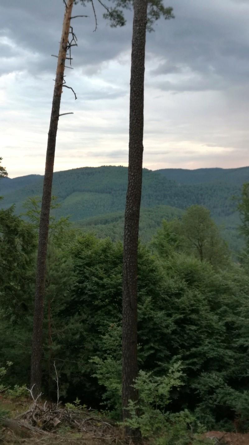 Pour GERARD / Territoire de chasse en Alsace Img_2012
