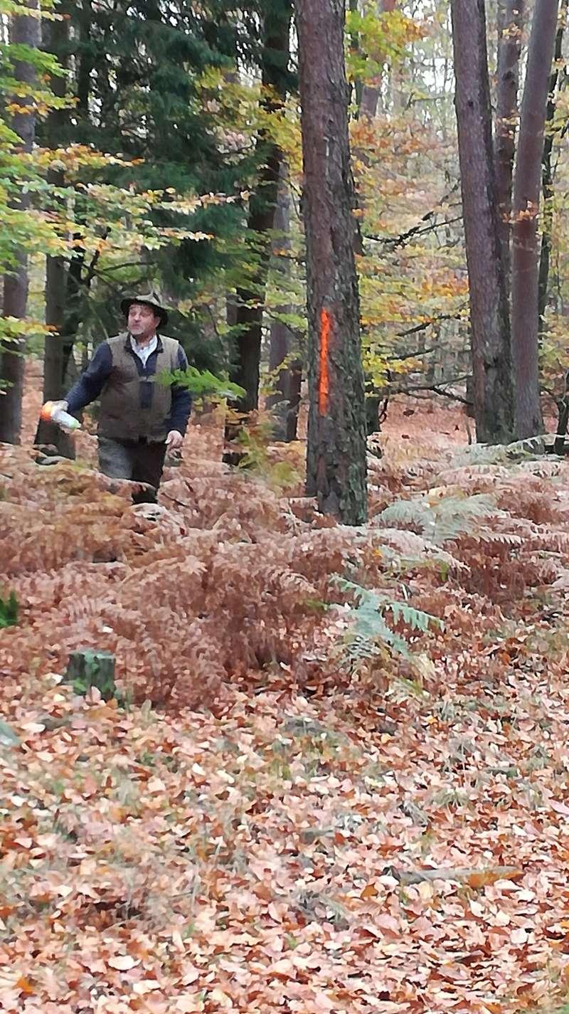 Pour GERARD / Territoire de chasse en Alsace - Page 3 Img_2021
