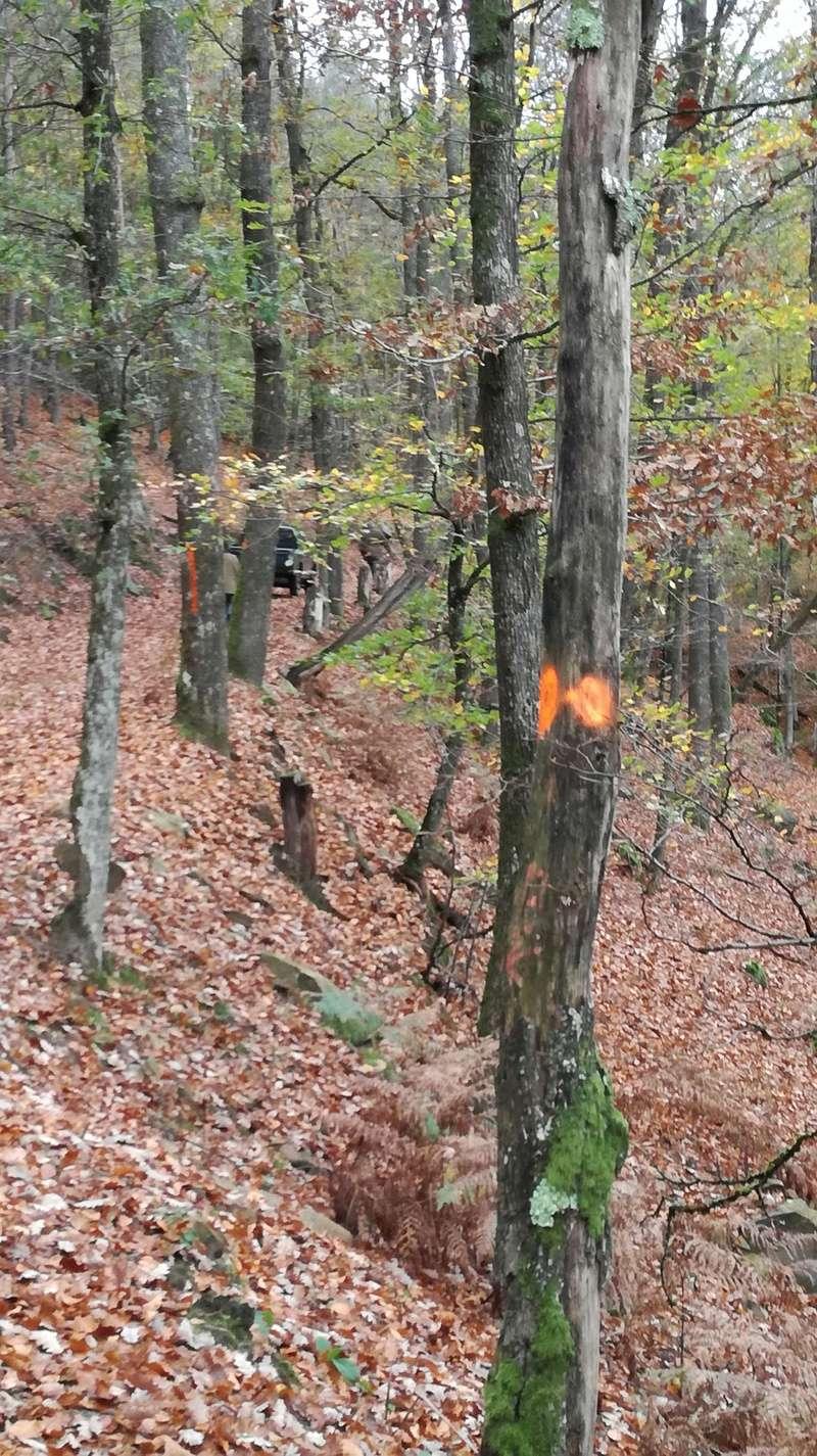 Pour GERARD / Territoire de chasse en Alsace - Page 3 Img_2022