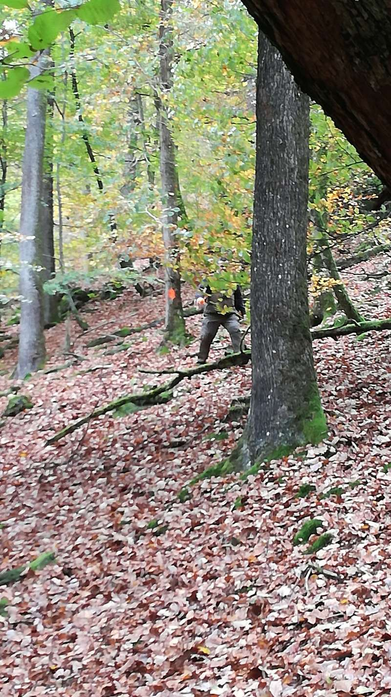 Pour GERARD / Territoire de chasse en Alsace - Page 3 Img_2023
