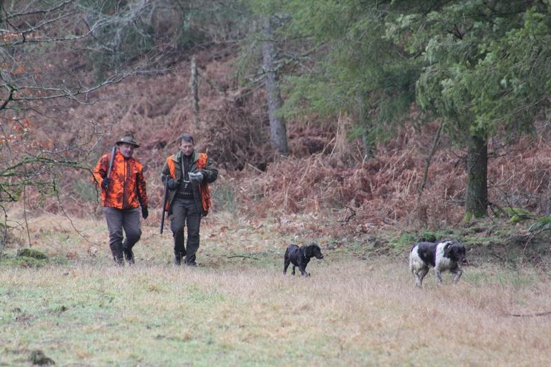 Pour GERARD / Territoire de chasse en Alsace - Page 4 Img_2819