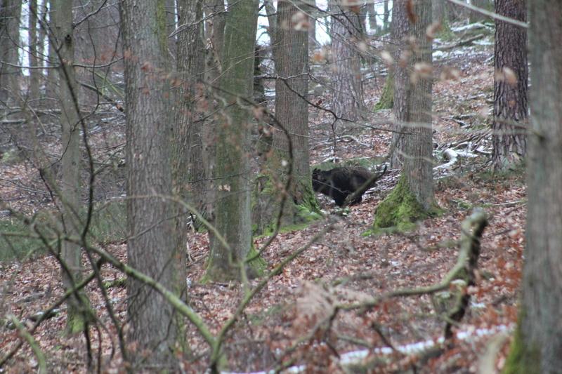 Pour GERARD / Territoire de chasse en Alsace - Page 5 Img_2919