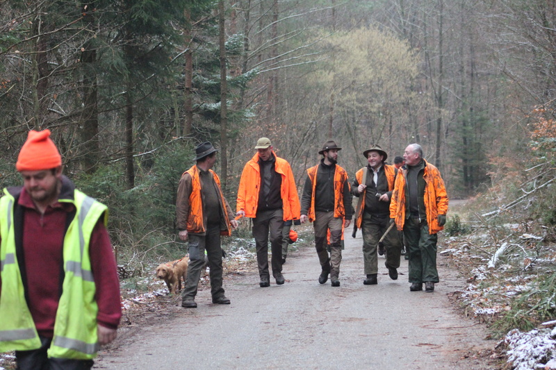 Pour GERARD / Territoire de chasse en Alsace - Page 5 Img_2920