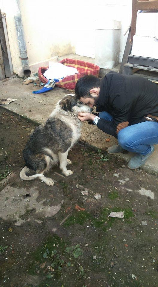 LORENA, F-X, née ?, 21KG (ORASTIE/Timisoara) A besoin d'urgence d'un traitement 26754010