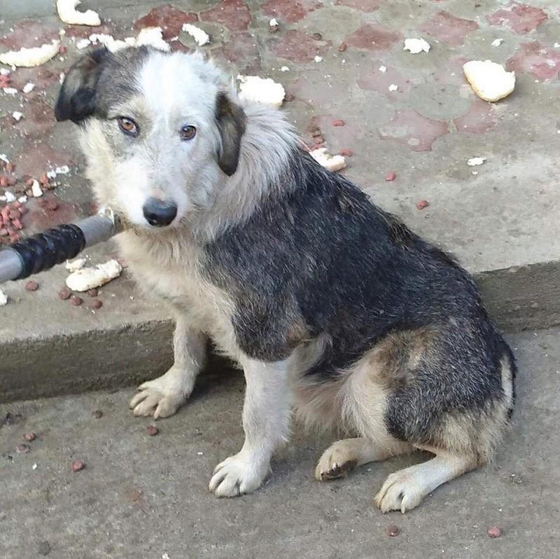 LORENA, F-X, née ?, 21KG (ORASTIE/Timisoara) A besoin d'urgence d'un traitement 26794210