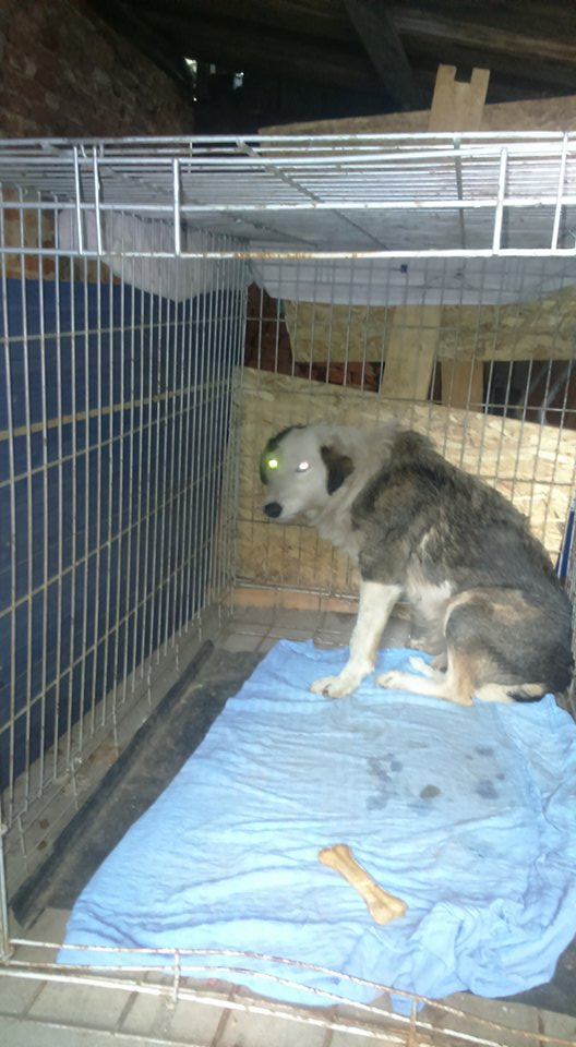 LORENA, F-X, née ?, 21KG (ORASTIE/Timisoara) A besoin d'urgence d'un traitement 26803210