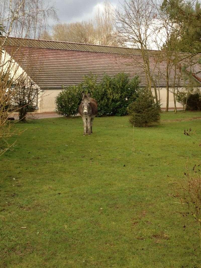 FREDO - âne né en 1995 - adopté en novembre 2012 par Virginie - Page 3 Fredo_10
