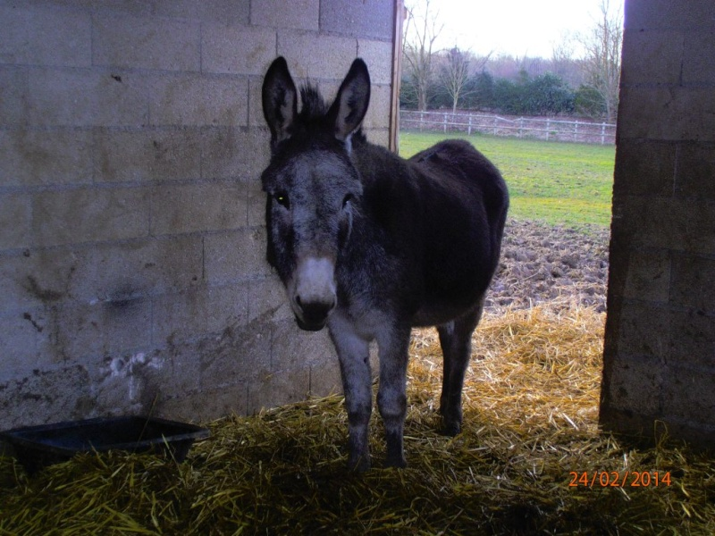 FREDO - âne né en 1995 - adopté en novembre 2012 par Virginie - Page 3 Fredo_11