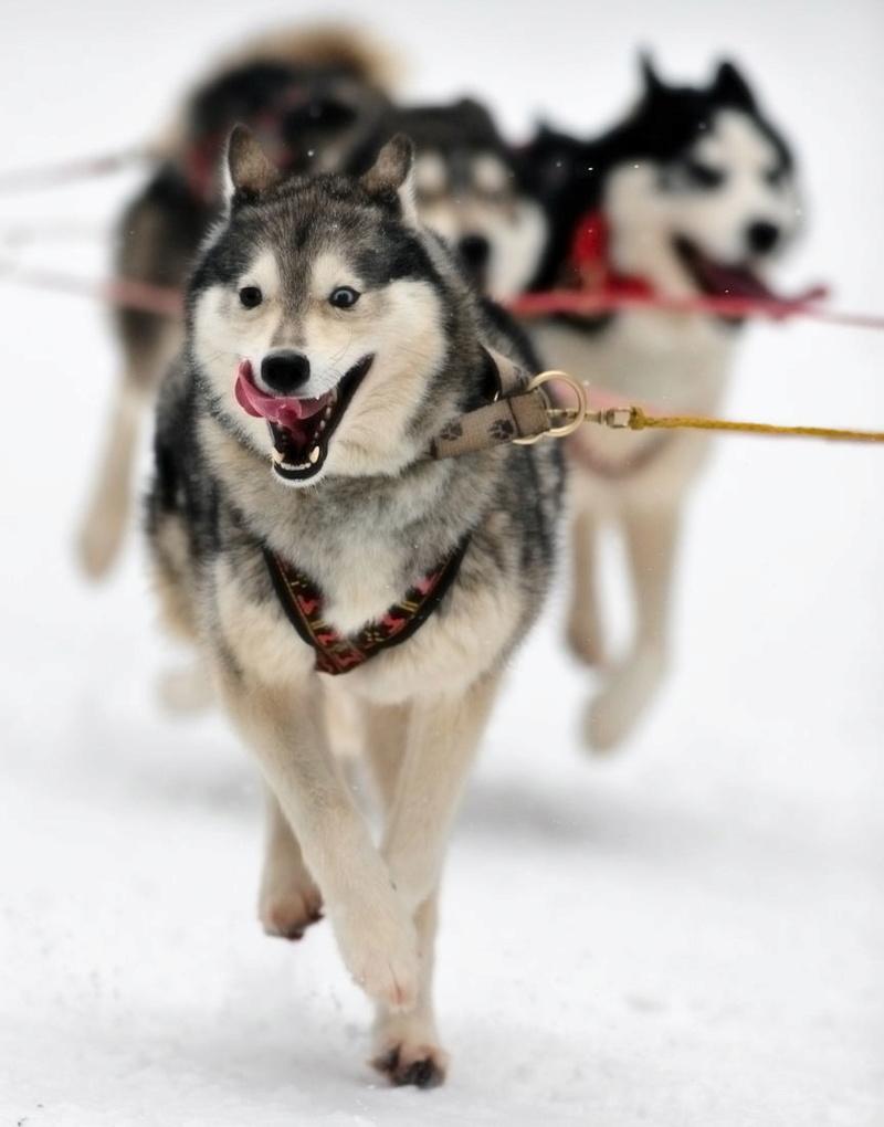 Course de chiens de traîneau au Lac Blanc Lac_bl10