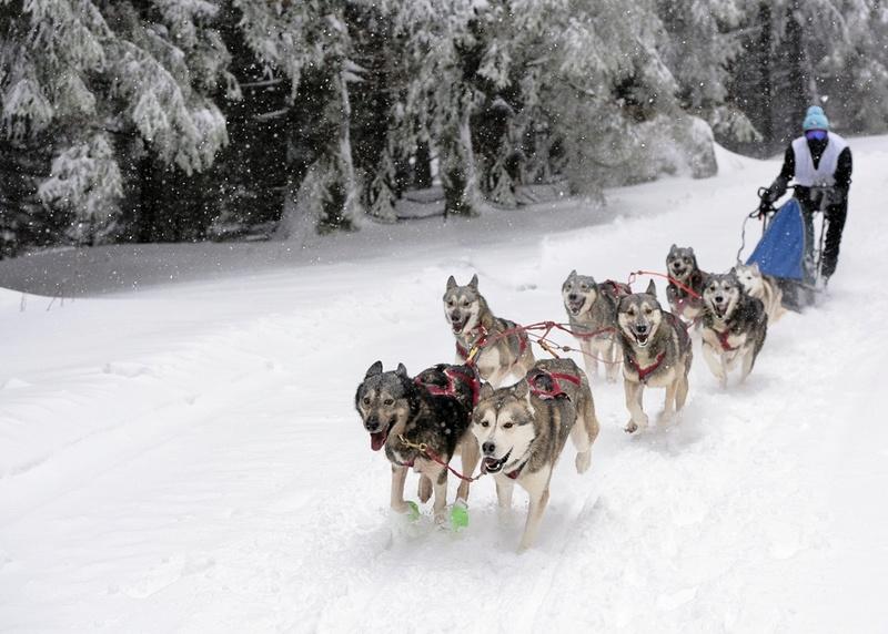 Course de chiens de traîneau au Lac Blanc Lac_bl12
