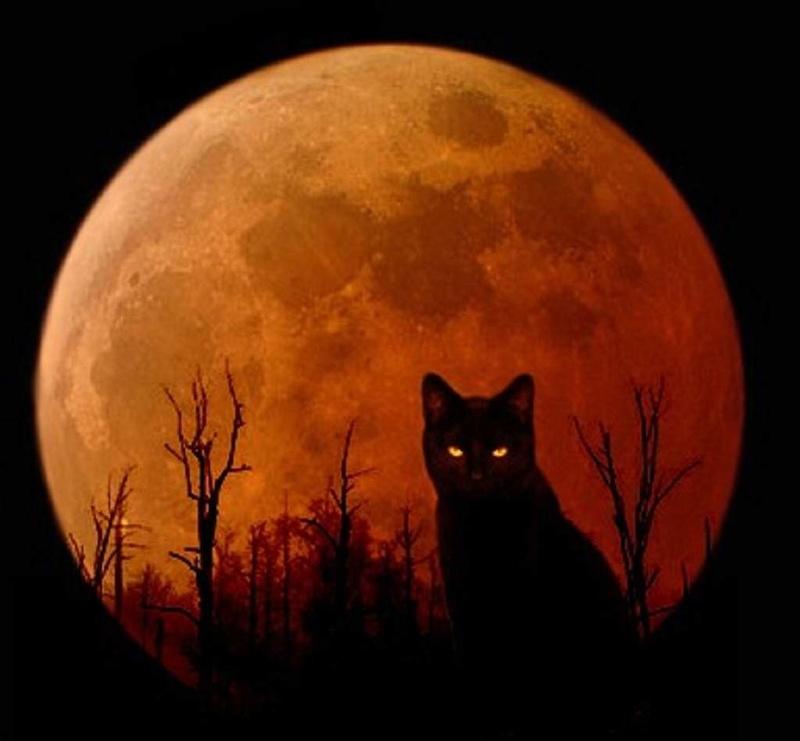 Los gatos y el Halloween Cat-ha12