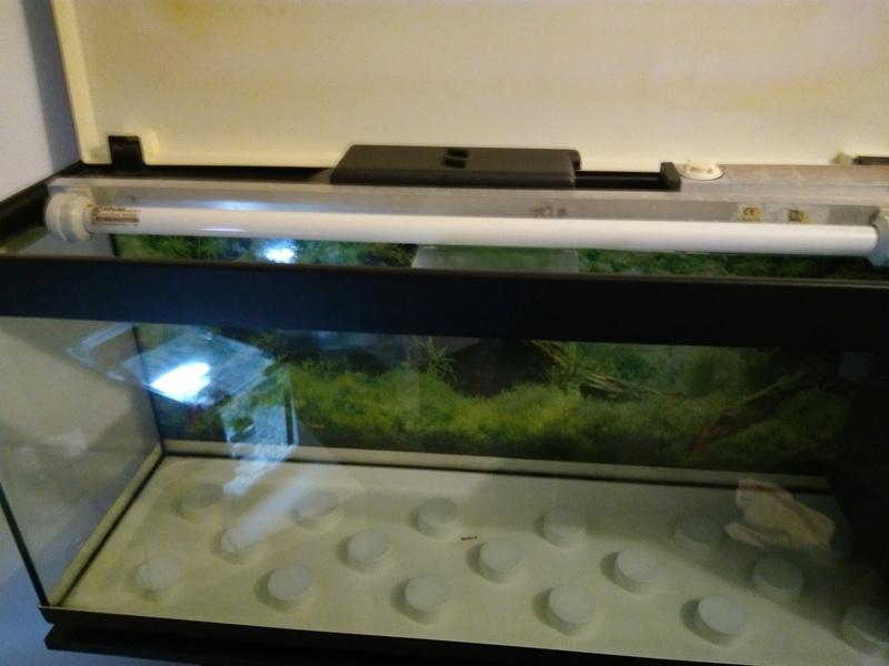 Débutante besoin d'aide pour projet aquarium 130 l Img_2010