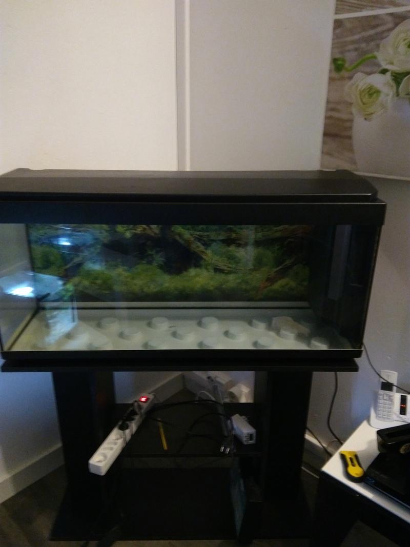 Débutante besoin d'aide pour projet aquarium 130 l Img_2011