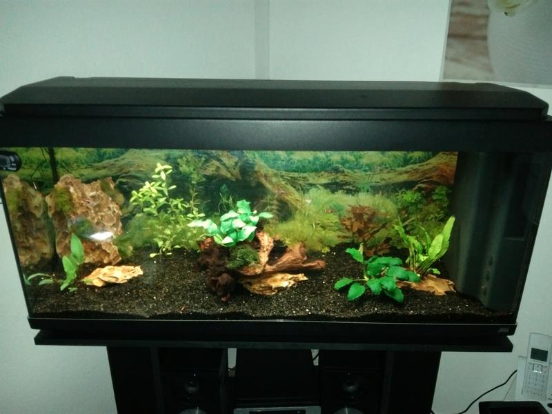 besoin de votre aide pour mon aquarium de 130 l - Page 3 Img_2038