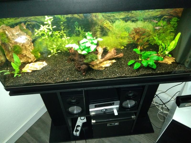 besoin de votre aide pour mon aquarium de 130 l - Page 3 Img_2039