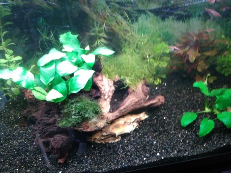 besoin de votre aide pour mon aquarium de 130 l - Page 3 Img_2040