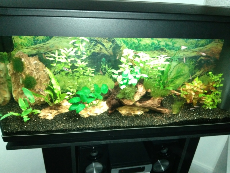 besoin de votre aide pour mon aquarium de 130 l - Page 4 Img_2045