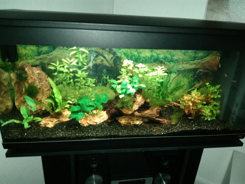 Naissance d'une passion ou l'histoire de mon nouvel aquarium Img_2049