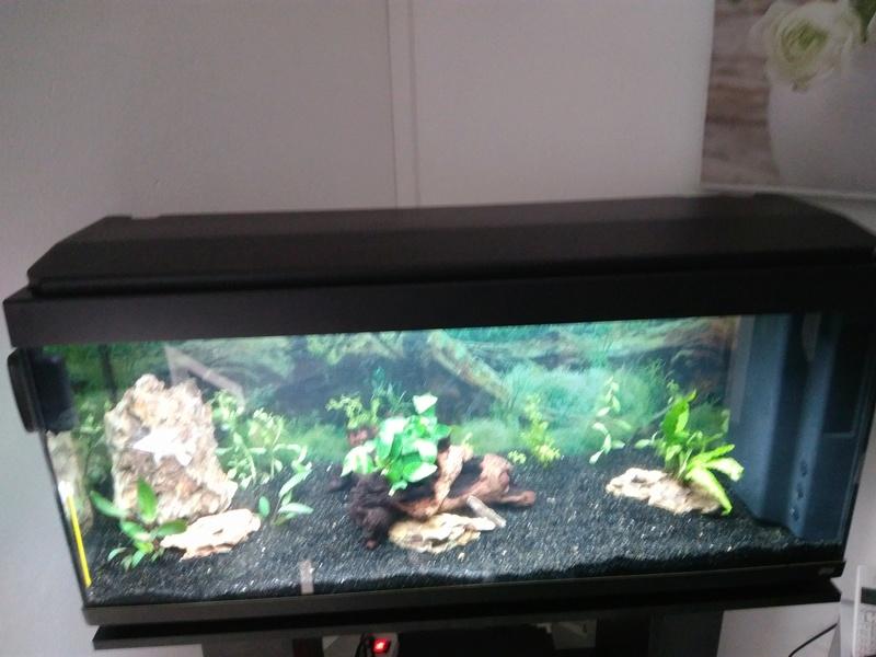 Naissance d'une passion ou l'histoire de mon nouvel aquarium Img_2050