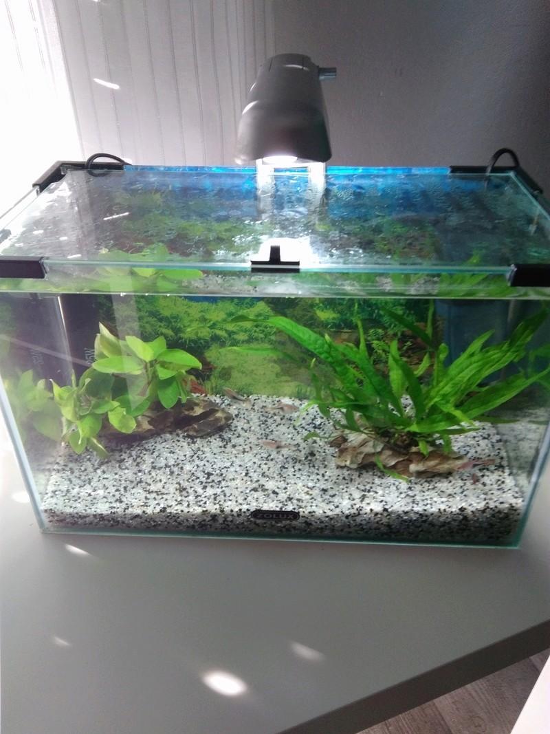 Naissance d'une passion ou l'histoire de mon nouvel aquarium Img_2051