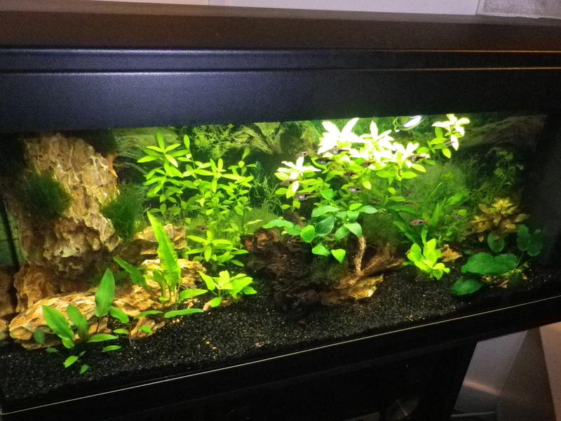 besoin de votre aide pour mon aquarium de 130 l - Page 4 Imgp0010