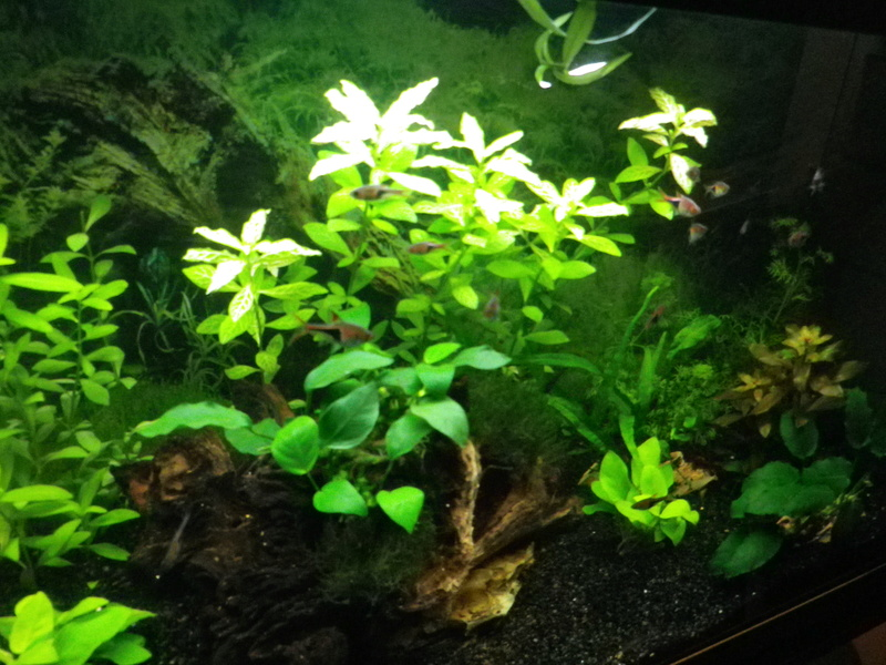 besoin de votre aide pour mon aquarium de 130 l - Page 4 Imgp0011
