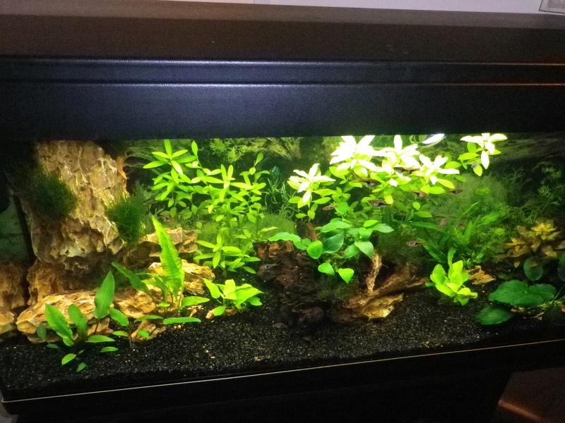 besoin de votre aide pour mon aquarium de 130 l - Page 4 Imgp0012