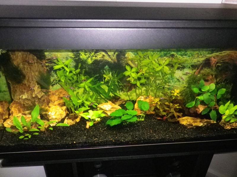 besoin de votre aide pour mon aquarium de 130 l - Page 5 Imgp0018