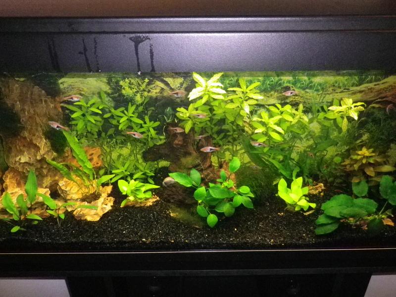 besoin de votre aide pour mon aquarium de 130 l - Page 5 Imgp0019