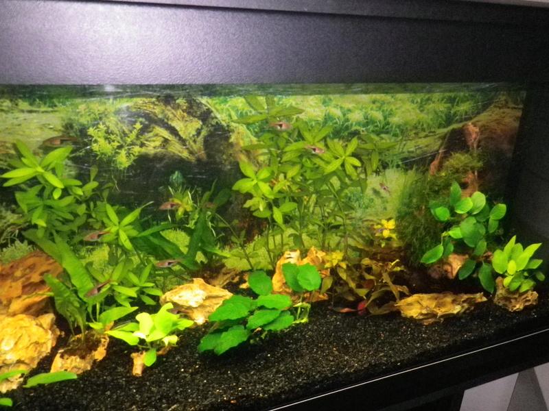 besoin de votre aide pour mon aquarium de 130 l - Page 5 Imgp0020