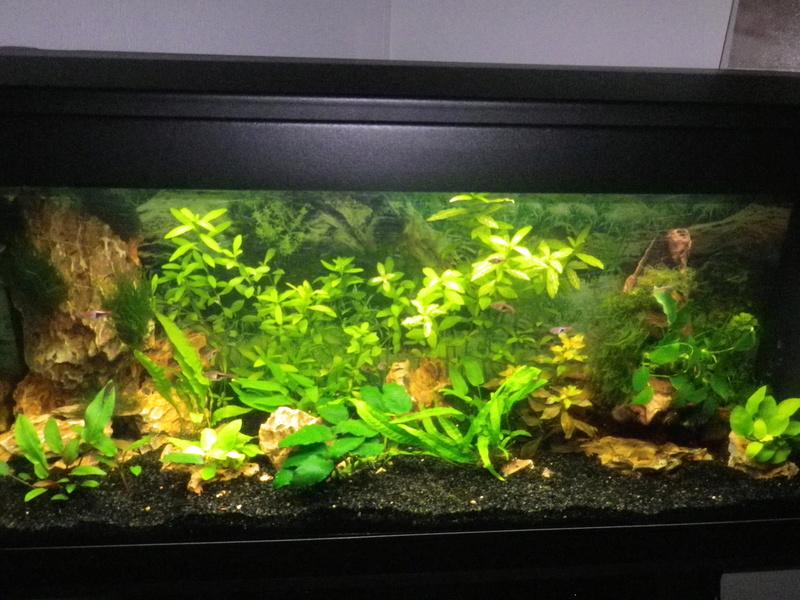 besoin de votre aide pour mon aquarium de 130 l - Page 5 Imgp0024