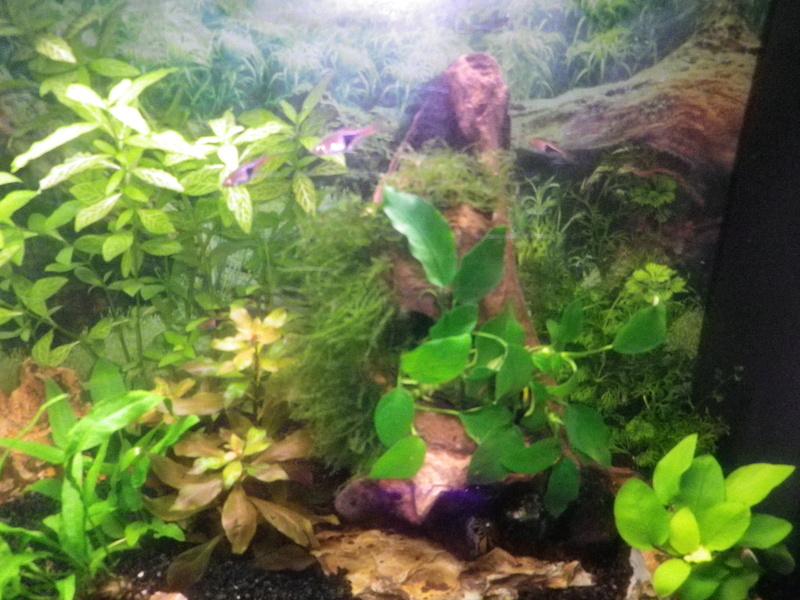 besoin de votre aide pour mon aquarium de 130 l - Page 5 Imgp0028